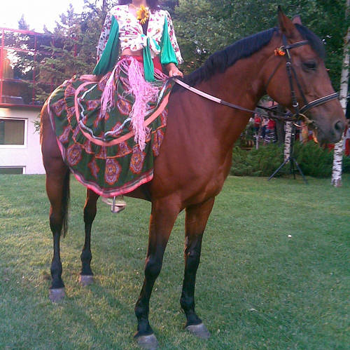 Romanian Saddle Horse