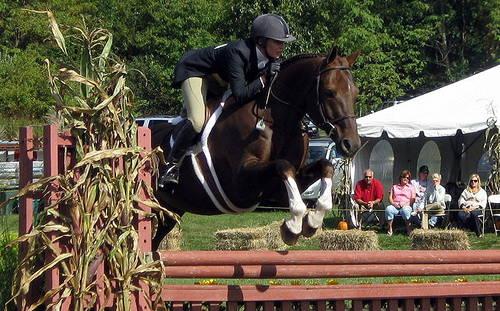 Sachsen Warmblood Horse