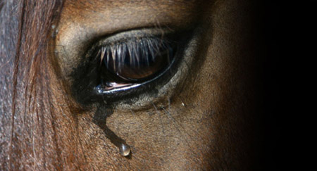 http://www.theequinest.com/images/sad-horse