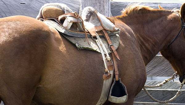 Chilean Saddle