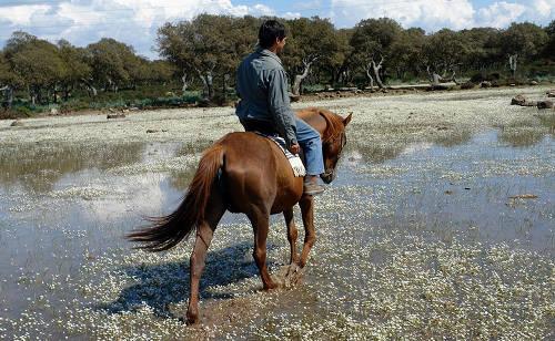 Sardinian Horse