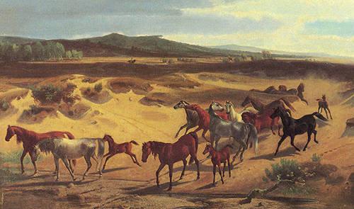 Senne Horse