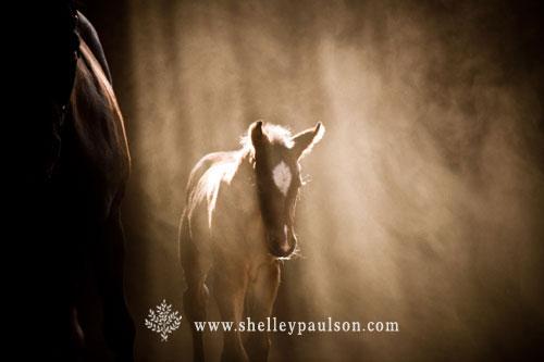 Shelly Paulson Horse