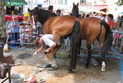 horse with blacksmith