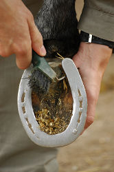 A close up of someone picking a horse hoof