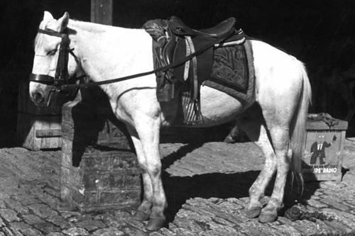 Sini Horse