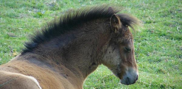 Sleepy Horse