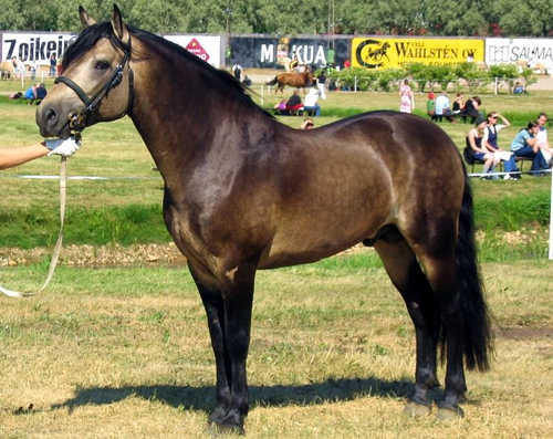 Horses Lovers: Color M...