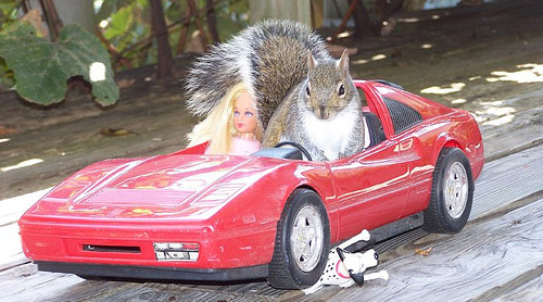Squirrel Driving Barbie Car