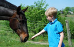 Horse Access