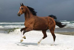 Stock Horse Photography