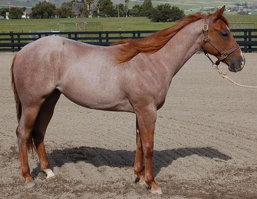 Horse Coat Colors - The Horse Forum