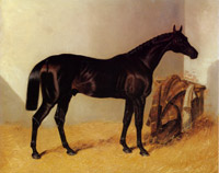 Charles XII the race horse