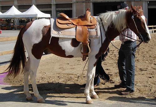Tobiano Pinto Horse