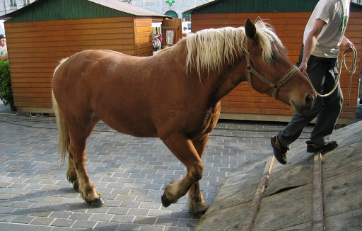 Tips for Towing Your Horse Safely