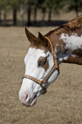 Valerie Lawson Horse