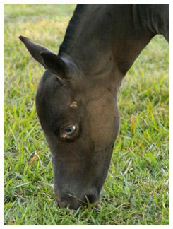 Blue eyed foal