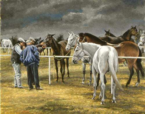 Gypsy Horse Sale