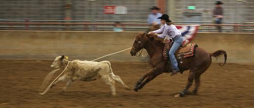 Western roping