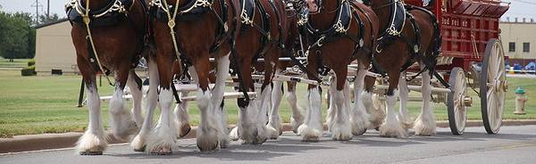 White Horse Socks